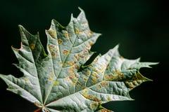 больной листьев стоковое изображение