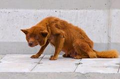 больной собаки Стоковое Фото