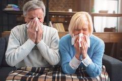 Больные пары пробуют чихнуть в салфетке Они уловили co стоковые фото