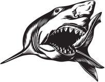 Большая агрессивныйая акула Стоковая Фотография