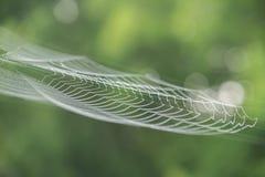 Большая белая сеть паука в росе в утре на зеленом лете b Стоковое Фото