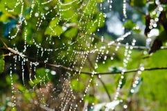 Большая белая сеть паука в росе в утре на зеленом лете b Стоковое Изображение