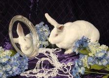 большая белизна кролика зеркала Стоковые Фото