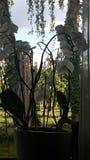 Большая белой орхидеи завода красивая стоковые изображения