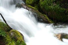 большая верба потока каньона Стоковое Изображение RF