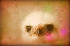 Большая винтажная картина белого птенеца хищной птицы Стоковая Фотография RF