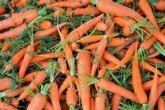 Большая группа в составе моркови свежести Стоковая Фотография