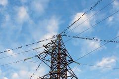 Большая группа в составе птицы сидя на проводах линии электропередач Стоковое Изображение RF