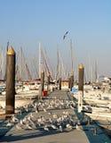 Большая группа в составе птицы стоя на пристани в гавани стоковая фотография rf