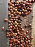 Большая группа в составе ladybirds некоторые не местные к Великобритании будучи в спящем режиме внутри деревянного ненужного ящик стоковое фото
