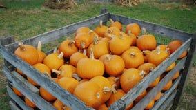 Большая деревянная коробка с тыквами для продажи хеллоуина стоковое фото rf