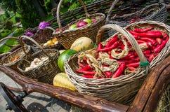 Большая деревянная тележка с свежими овощами от фермы Стоковые Изображения