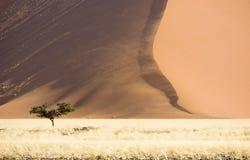 большая дюна Стоковые Изображения