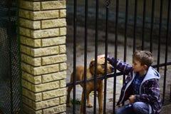 Большая заживление терапия приятельство и влюбленность Мальчик patting собака Мальчик принимает нового друга от собак стоковые изображения rf