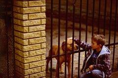 Большая заживление терапия приятельство и влюбленность Мальчик patting собака Мальчик принимает нового друга от собак стоковое фото