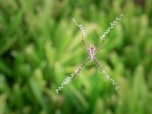 Большая закрутка паука сеть стоковое фото rf