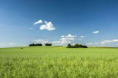 Большая зеленая группа поля и дерева Стоковые Фотографии RF