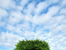 Большая зеленая крыша дерева с белыми облаками и голубым небом Стоковые Изображения RF