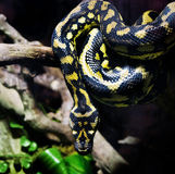 большая змейка Стоковое Изображение RF