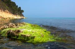 большая каменная вода Стоковые Фото