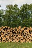 Большая куча древесины дуба в лесе стоковое фото