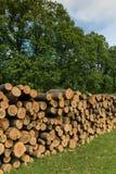 Большая куча древесины дуба в лесе стоковые фото