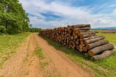 Большая куча древесины дуба в лесе стоковые изображения rf