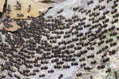 Большая миграция колонии муравьев стоковое изображение rf