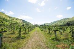 Большая плодоводческая ферма дракона Стоковые Изображения
