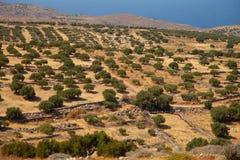 большая прованская плантация Стоковая Фотография RF
