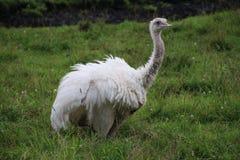 Большая птица в траве Стоковое Фото