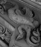Большая птица охотясь змейка Стоковая Фотография