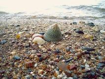 Большая раковина моря на пляже песка Стоковое Изображение