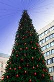 Большая рождественская елка на ноче Стоковое Изображение