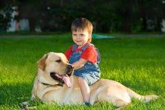 большая собака Стоковые Фото