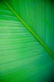 большая текстура листьев Стоковые Изображения RF