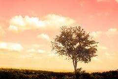 Большая тоскливость дерева самостоятельно на лете Стоковая Фотография RF