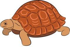 Большая черепаха стоковые фотографии rf