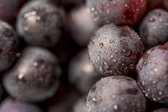 Большая черная виноградина Стоковое Изображение RF