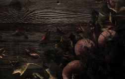 большая яркая отливка подрезывая удлиненную сеть паука тени тайны лунного света венчика гибкостей пирофакелов таинственную Стоковые Фото