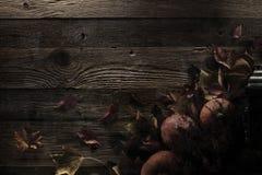 большая яркая отливка подрезывая удлиненную сеть паука тени тайны лунного света венчика гибкостей пирофакелов таинственную Стоковая Фотография