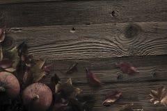 большая яркая отливка подрезывая удлиненную сеть паука тени тайны лунного света венчика гибкостей пирофакелов таинственную Стоковое Фото