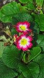 Больше цветков принятых в дендропарк Ноттингем Великобританию Стоковые Фотографии RF