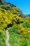 большие горы горы ландшафта Взгляд гор на трассе Encumeada - Boca De Corrida, острове Мадейры, Португалии, Европе Стоковое Изображение
