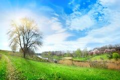 Большие дерево и озеро стоковые фотографии rf