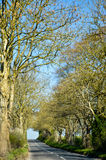 Большие деревья, проселочная дорога, голубое небо, Англия Стоковые Фото