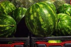 Большие зеленые арбузы в коробках Стоковые Фото