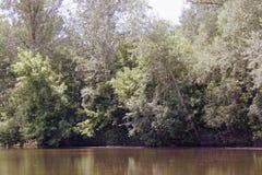 Большие зеленые деревья растут около воды стоковая фотография rf