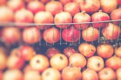 Большие зрелые красные венисы в рынке Стоковая Фотография RF
