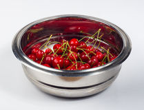 большие зрелые красные вишни Стоковое фото RF